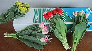 ひと足先に春をお届けしたい!チューリップ花束coming soon!