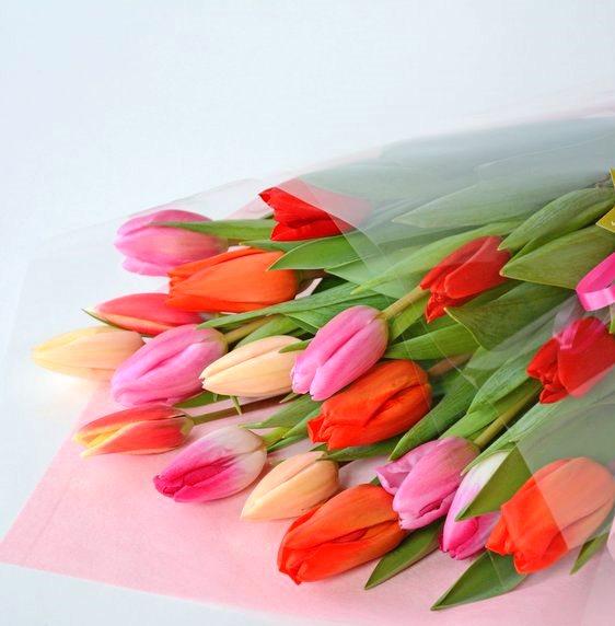 心がおどる春の色、春の一番人気花、チューリップ花束を北国青森からお届けします。チューリップの花言葉は色によって違います。レッドは「愛の告白」、ピンクは「誠実な愛」、イエローは「望みのない恋」などいろいろあります。これから卒業式・ひな祭り・ホワイトデー・退職・送別会などお花を贈る機会が多い時期です!今しか贈れないお花を贈りませんか!!